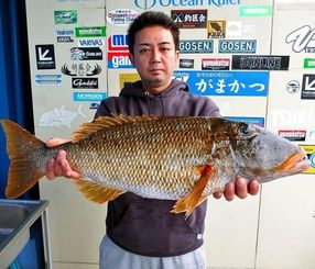 12月31日、読谷海岸で69センチ4.62キロのウムナガーを釣ったチーム笛吹隊の伊波智樹さん。餌は島ダコ