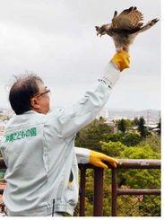 金城獣医の手から飛び立とうとするサシバ=20日、沖縄市胡屋・沖縄こどもの国