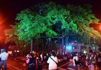 樹齢320年、名護市の国指定天然記念物をライトアップ