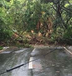 久米島町比屋定で県道242号を寸断した土砂崩れ現場。通勤・通学の車やバスが通る生活道路だが復旧のめどは立っていない=3日午前、同所(同町役場提供)