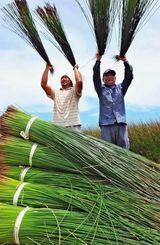 刈り取ったビーグの仕分け作業に汗を流す農家=30日午後、うるま市与那城照間(長崎健一撮影)