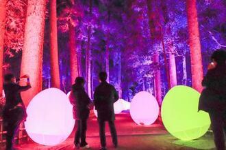 人の動きに反応して光の色が変わるチームラボの作品=26日夜、水戸市の偕楽園