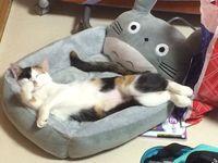 沖縄のネコ写真全応募作品 ツイッター編その1
