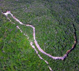 N1地区付近の旧林道から分かれ(左上の部分)、蛇行する形で新たに切り開かれた工事用道路=17日、国頭村安波(提供、小型無人機から)