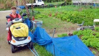 「野菜作りが最高の健康作り」と、愛用の小型四輪車で畑に通う大城ミヨさん=国頭村奥間