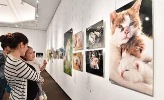 かわいらしいネコの写真を笑顔で鑑賞する来場者=1日、浦添市美術館