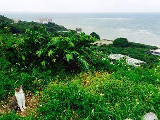 「ビューを見放題だニャー」斎場御嶽の近くで海を眺めてたら、先に特等席におられました。まったく動かず