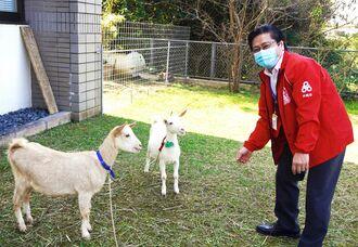 沖縄市上下水道局に「草刈り隊」として導入されたヤギの「さくら」(左)と「ゆき」。新里智昭上下水道部長(右)は「今後の活躍が楽しみ」と期待を寄せている=1月26日、同市美里・同局