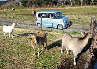 「ドライブスルーファーム」を楽しむ来場者=16日午前、千葉県富津市のマザー牧場
