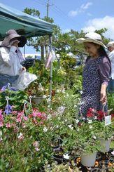ゼラニウムなど色鮮やかな草花に目を凝らす来場者=6日、沖縄市登川の市農民研修センター