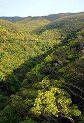 鮮やかな新緑に彩られたやんばるの森=15日午後、国頭村比地(田嶋正雄撮影)