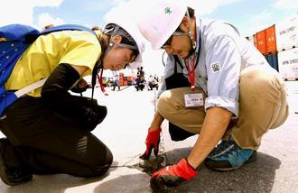 岸壁周辺の溝を細かく調べ、ヒアリがいないかを確認する環境省の職員ら=4日午後、那覇新港