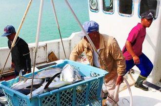 大量のカツオが次々と水揚げされていった=石垣市・八重山漁港