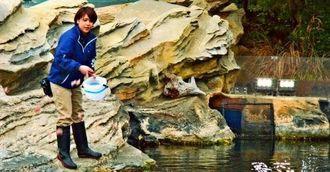 「アクアマリンふくしま」で技術員として働く上運天萌子さん=1月30日、福島県の同水族館