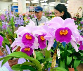 色鮮やかに咲き誇るランに見入る来場者=4日、浦添市城間・メイクマン浦添本店
