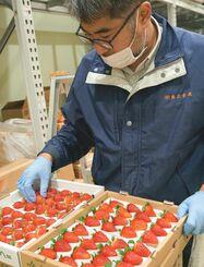 クリスマスケーキ用などに納品するイチゴの状態をチェックする兼正青果の古波倉正紀常務=21日、那覇市の同社