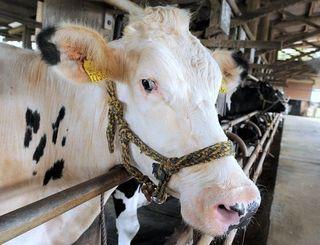 乳牛(資料写真)