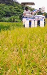稲をコンバインで収穫する大浜博彦さん=1日、石垣市名蔵浦田原(新垣玲央撮影)