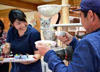 デコレーションされたキャットフードのケーキを猫に差し出す客(右)=那覇市・猫カフェ「にゃんそ~れ」