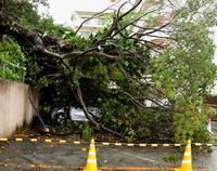 猛烈な雨、神社の大木倒れ車2台つぶす 沖縄で3時間107ミリ