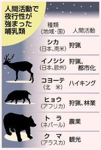 夜に追いやられる動物/人の活動影響/世界各地 環境適応できない恐れ