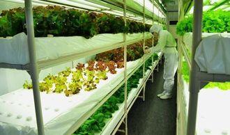 イオンスタイルライカムで販売されている「デライト・フーズ」の野菜工場=2日、北中城村・イオンモール沖縄ライカム
