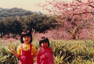 【「南桜」のモチーフ。家族での思い出が深い、八重岳の桜。】