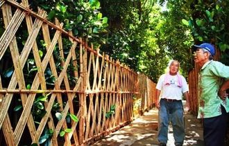 フクギ並木に伝統の竹垣(チニブ)が設置された=今帰仁村今泊
