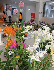 開幕を前に、次々と搬入されるランの花々=本部町・熱帯ドリームセンター