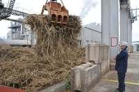 台風少なく砂糖生産量、9年ぶり1万トン超へ 沖縄県石垣で製糖開始