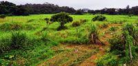 米軍倉庫群受け入れに条件 沖縄市長が国に要望