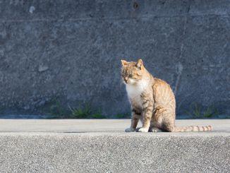 「ひなたぼっこ」2017年1月28日、南城市の「奥武島」を散歩中に堤防で気持ちよさそうに日向ぼっ こをしているネコに遭遇しました。