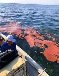 帯状に漂流するサンゴの卵=5月25日、伊是名ビーチから屋那覇島の海域