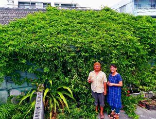 店舗全体へのパッションフルーツの広がりを楽しみにする伊藤利博さん、こずえさん夫妻=石垣市大川