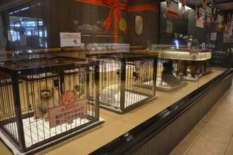 ペットボックスの一角でオムファムから販売されている犬=26日、那覇市おもろまち・ペットボックス那覇店