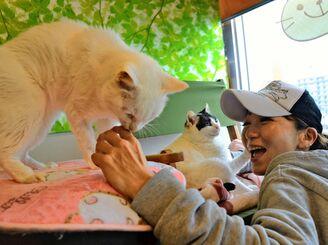 保護猫の世話をするアベニールの石垣深樹さん=2月、県内