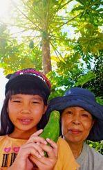 雄パパイアの木になった実に驚いた知念政枝さん(右)と孫の莉子ちゃん。後方に実の下がる雄パパイア=22日、与那原町板良敷