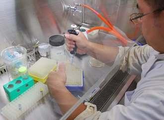 県内の天然資源を使ってウイルスの感染抑制効果を調べる研究員=10日、うるま市・沖縄ライフサイエンス研究センター