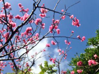 13日の沖縄地方は高気圧に覆われ、夏日となった所も