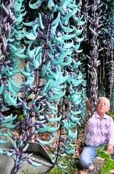 エメラルドグリーン色の花を咲かせたヒスイカズラ=10日、南城市佐敷手登根(下地広也撮影)