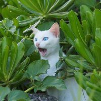 沖縄のネコ写真全応募作品 ツイッター編その3