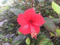 沖縄、新年は暖冬です 気象台3カ月予報