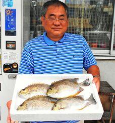 安謝海岸で35・5センチ、810グラムのカーエーを釣った砂川昌克さん=17日