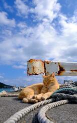 やわらかな日差しと海風を受けながらうたた寝するネコ=5日、南城市玉城・奥武島(古謝克公撮影)