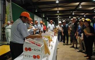 第10回県マンゴーコンテスト受賞農家のマンゴーが競りにかけられた=31日、浦添市の県中央卸売市場