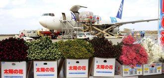 本土の市場へ向けて臨時貨物便で出荷の準備を進める「太陽の花」の彼岸用キク=6日、那覇空港