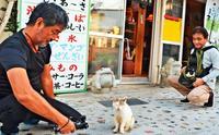 主役は猫だニャン! 徹底した猫目線で人間社会描く、映画「Nyaha!」制作中