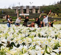 花満開 インスタ映え/伊江島ゆり祭り始まる