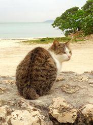 「珊瑚と猫と海と」2014年12月に竹富島のコンドイ浜で朝の散策中に出会った猫。
