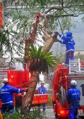 倒れて電線に引っかかった街路樹を撤去する消防職員=午後4時13分、那覇市泉崎